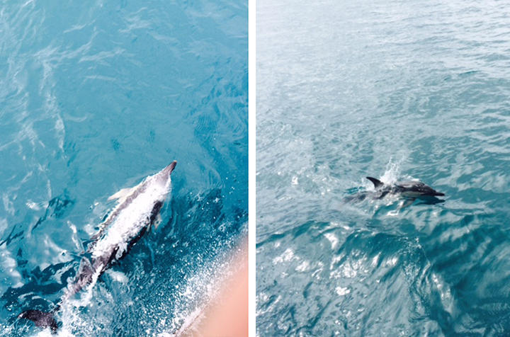 Dolphins in the Irish Sea