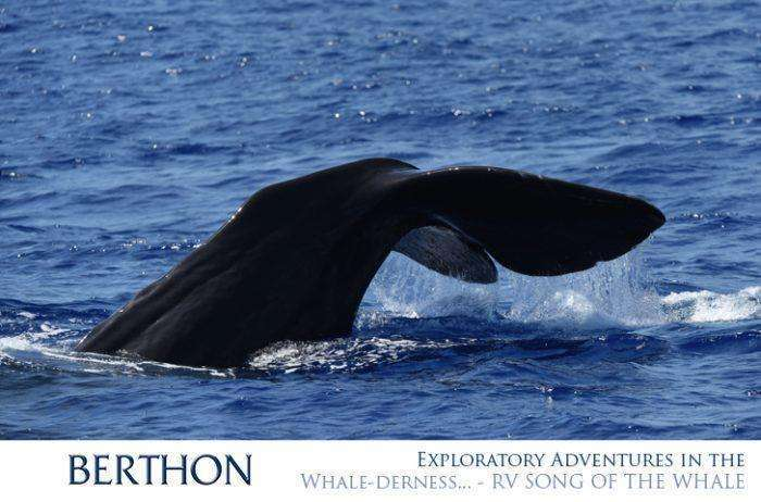 exploratory-adventures-in-the-whale-derness-rv-song-of-the-whale-5