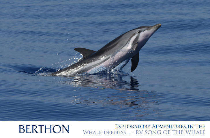 exploratory-adventures-in-the-whale-derness-rv-song-of-the-whale-6