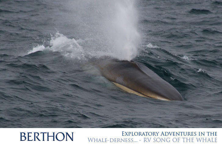 exploratory-adventures-in-the-whale-derness-rv-song-of-the-whale-7