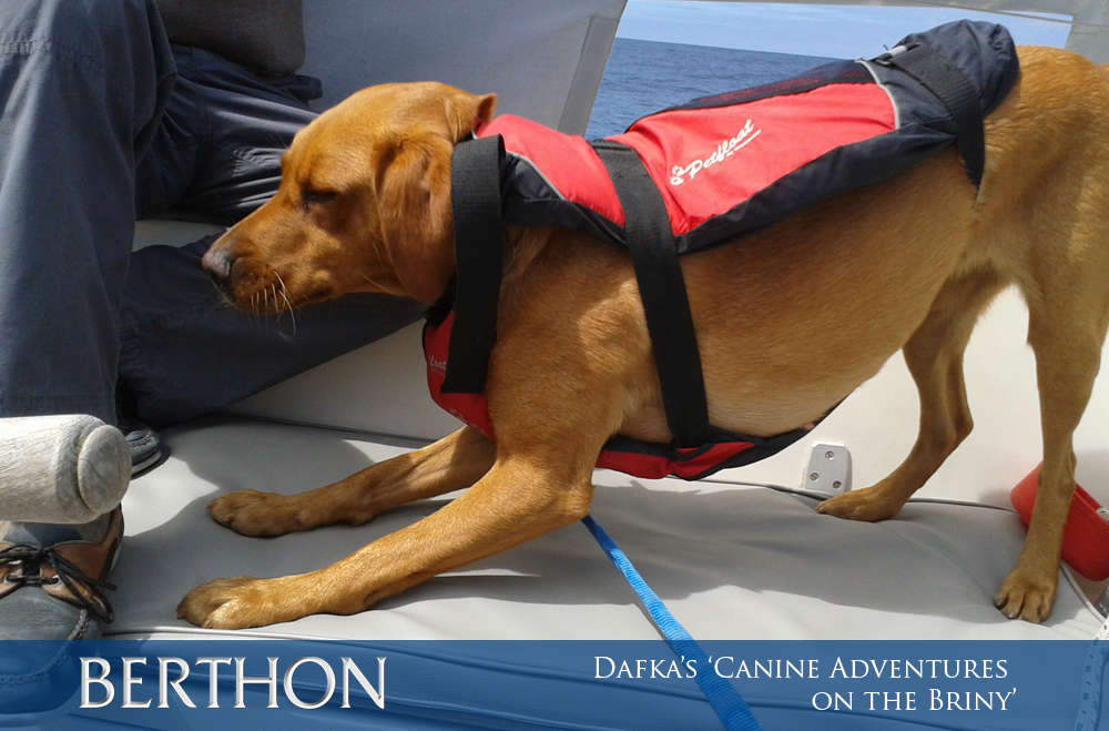 dafkas-canine-adventures-on-the-briny-3