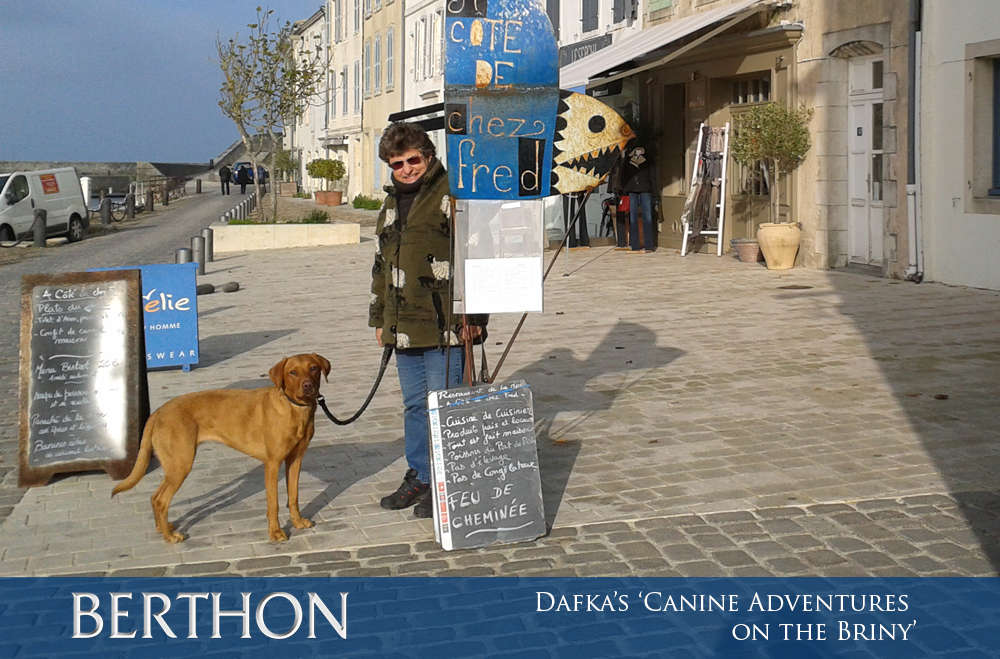 dafkas-canine-adventures-on-the-briny-5
