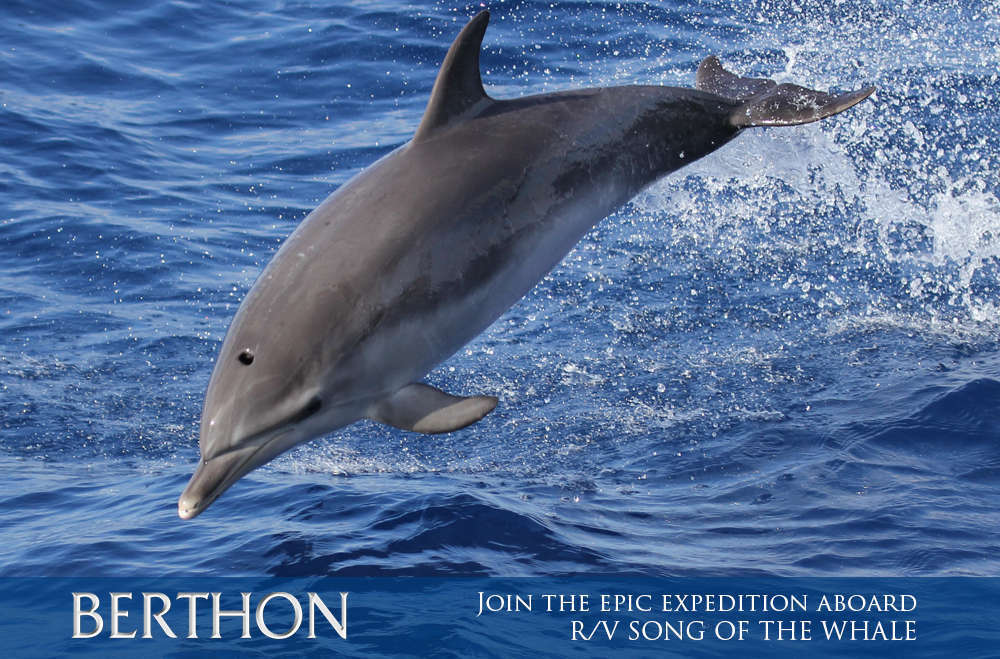 join-the-epic-expedition-aboard-rv-song-of-the-whale-4