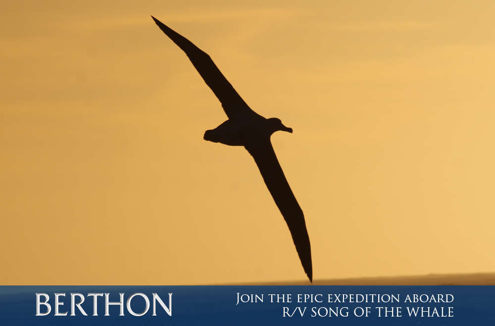 join-the-epic-expedition-aboard-rv-song-of-the-whale-7