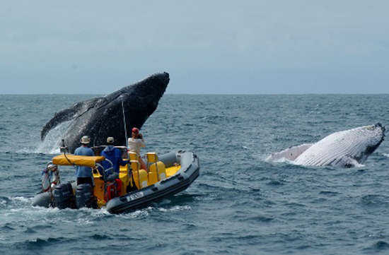 Eco Adventures & Whale Watching!