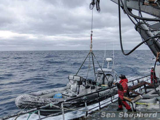 Global Adventure onboard Sea Shepherd